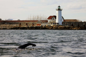 Gary swims for Portsmouth Harbor Lighthouse
