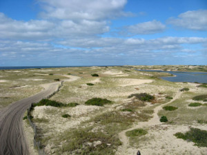 Sand dunes of the Cape Cod National Seashore